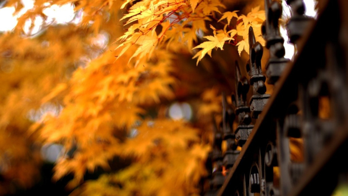 autumn_color_01