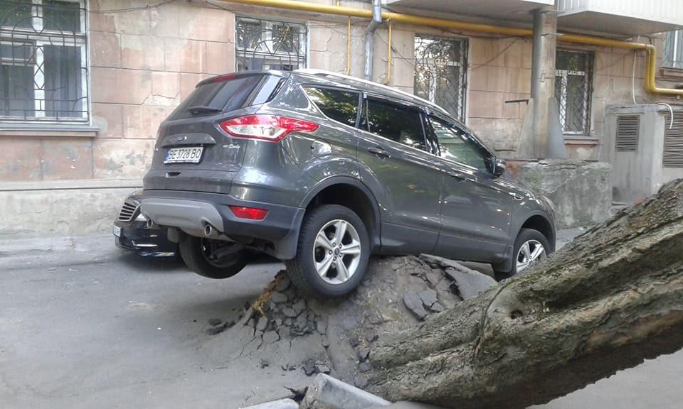 В Николаеве падающее дерево вырвало корнями асфальт вместе ...