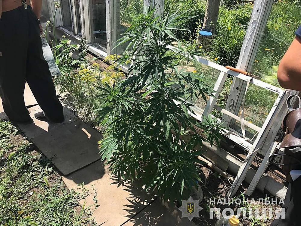 Как вырастить коноплю на участки марихуана тв